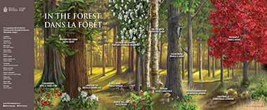 In the forest - Poster (Bilingual)